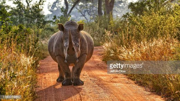 wild rhino roadblock - rock formation stock pictures, royalty-free photos & images