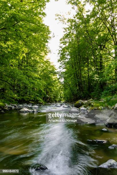 wild river in the forest - heather brooke ストックフォトと画像