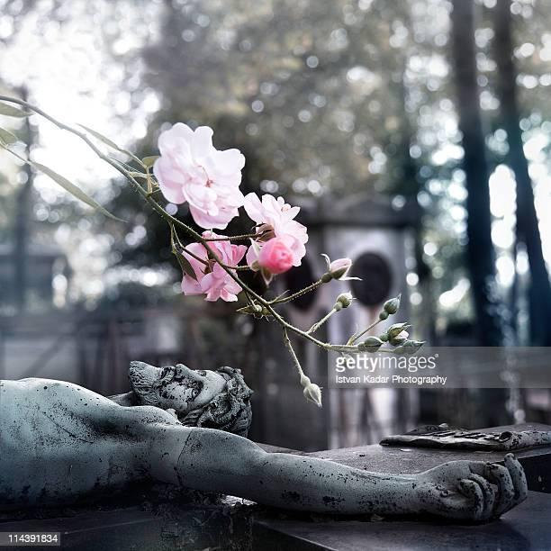 Wild roses on Crucified Jesus Graveyard