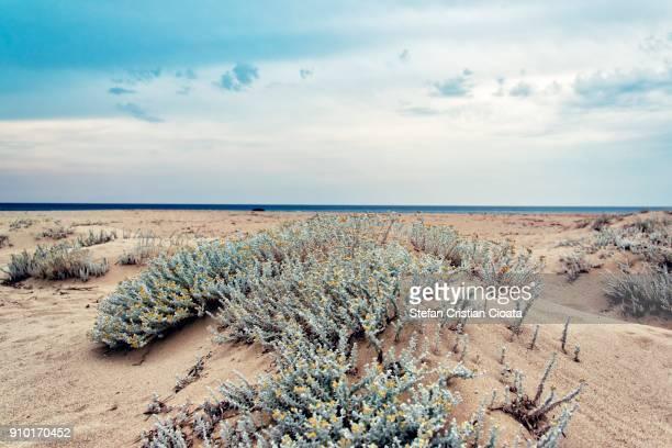 wild sardinia - oristano imagens e fotografias de stock