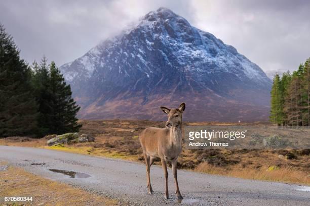 Wild Scotland