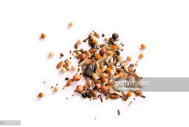 wild seeds - seed stock pictures, royalty-free photos & images