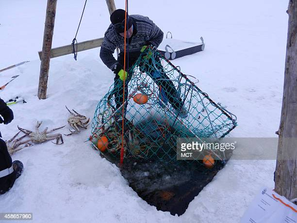 A wild snowmobile ride on the ice ends when we pull king crab traps from the fjord's icy waters