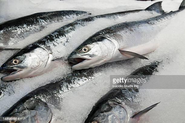 Wild sockeye salmon displayed for sale  in ice