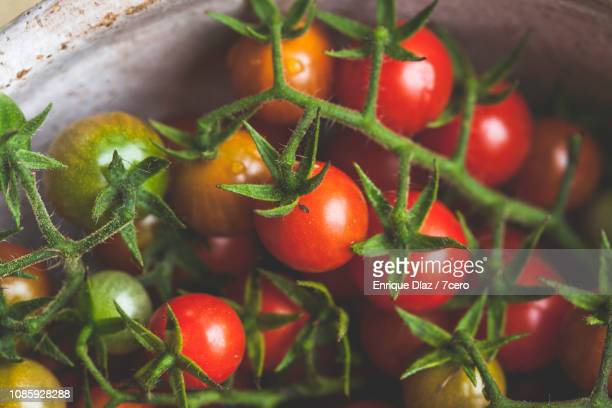 Wild Sown Cherry Tomatoes, Close-Up 2