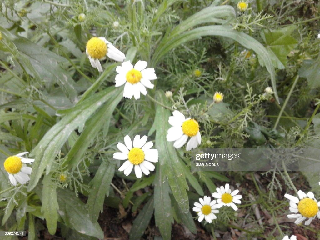Wild Spring Flowers Grow In Palestine Stock Photo Getty Images