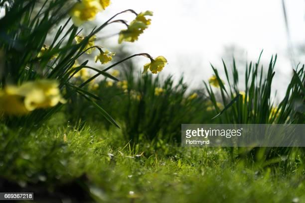 Wild spring flowers in full bloom