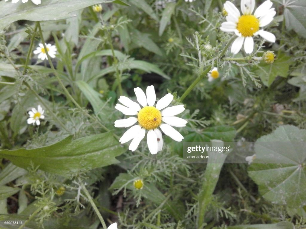 Wild Spring Flowers Stock Photo Getty Images