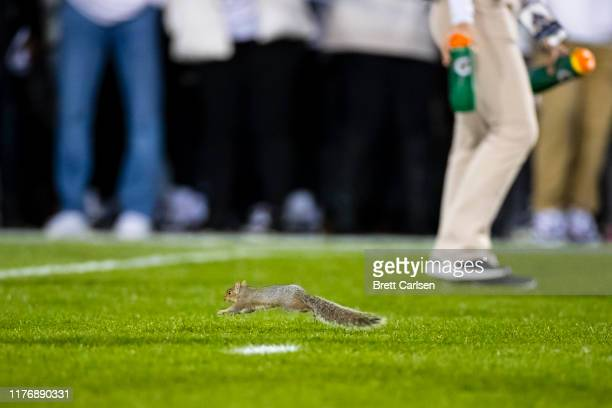 Wild squirrel runs across the field before the game between the Penn State Nittany Lions and the Michigan Wolverines on October 19, 2019 at Beaver...