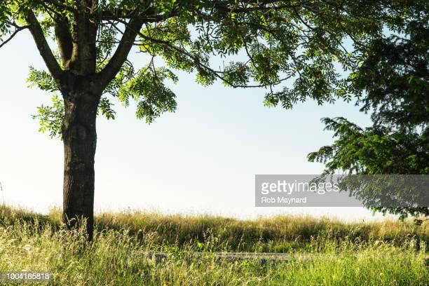 wild trees at the field - tree trunk stock pictures, royalty-free photos & images