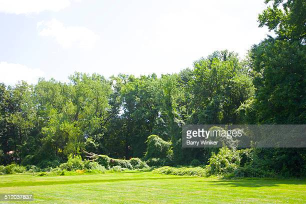 wild vines on unusual trees near ridgewood - ridgewood new jersey stock pictures, royalty-free photos & images