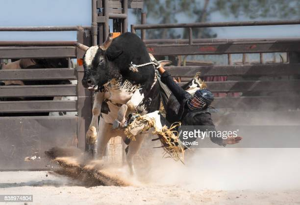 wild west rodeo cowboy riding a bucking black bull