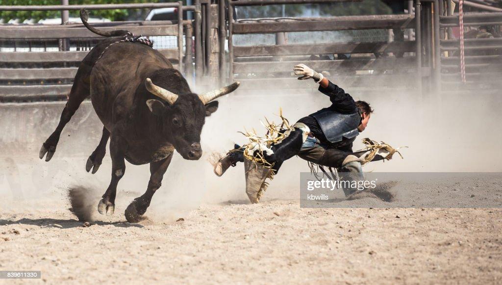 wild west rodeo cowboy riding a bucking black bull : Stock Photo