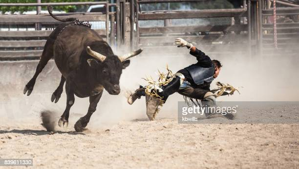 wild west rodeo cowboy riding a bucking black bull - bullock stock photos and pictures