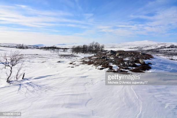wild white spaces in the mountains of jamtland - tundra foto e immagini stock