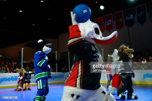 Wild Wing of the Anaheim Ducks participates in the 2019 NHL AllStar Mascot Showdown on January 24 2019 in San Jose California