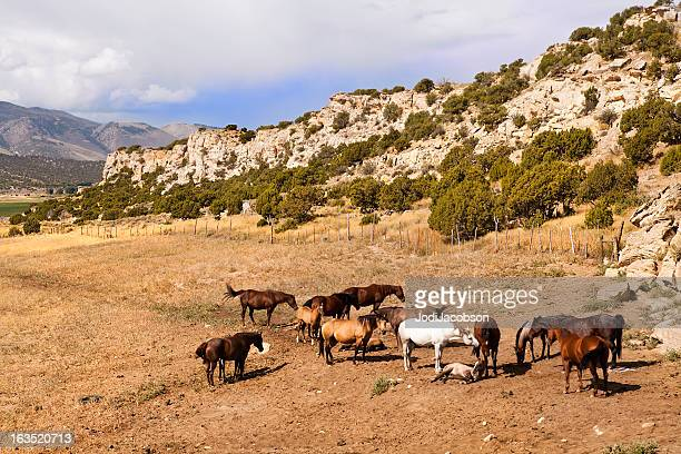 wild wyoming horses - jodi west stock pictures, royalty-free photos & images