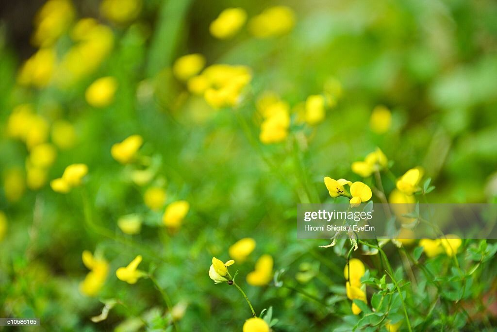 Wild yellow flowers stock photo getty images wild yellow flowers stock photo mightylinksfo