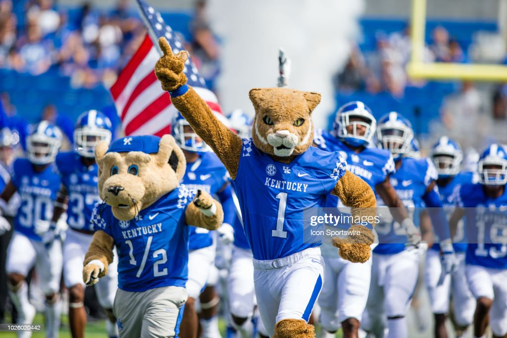 wildcat the kentucky mascot leads the team out of the tunnel