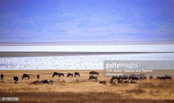Wildebeest and Flamingo in Ngorongoro, Tanzania Africa