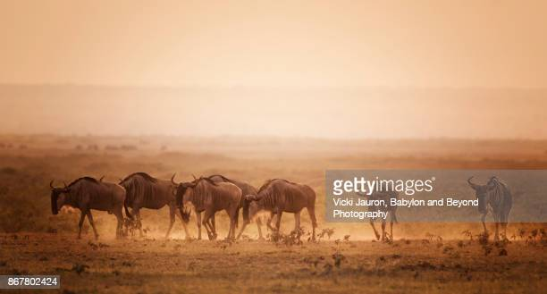 Wildebeest in the Haze at Sunset at Amboseli