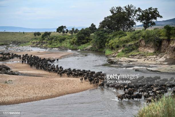 Wildebeests run across a sandy riverbed of the Sand River as they arrive into Kenya's Maasai Mara National Reserve from Tanzania's Serengeti National...