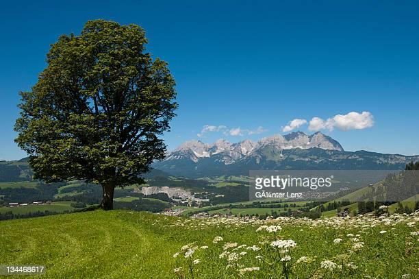 Wilder Kaiser mountain ridge, Tyrol, Austria, Europe