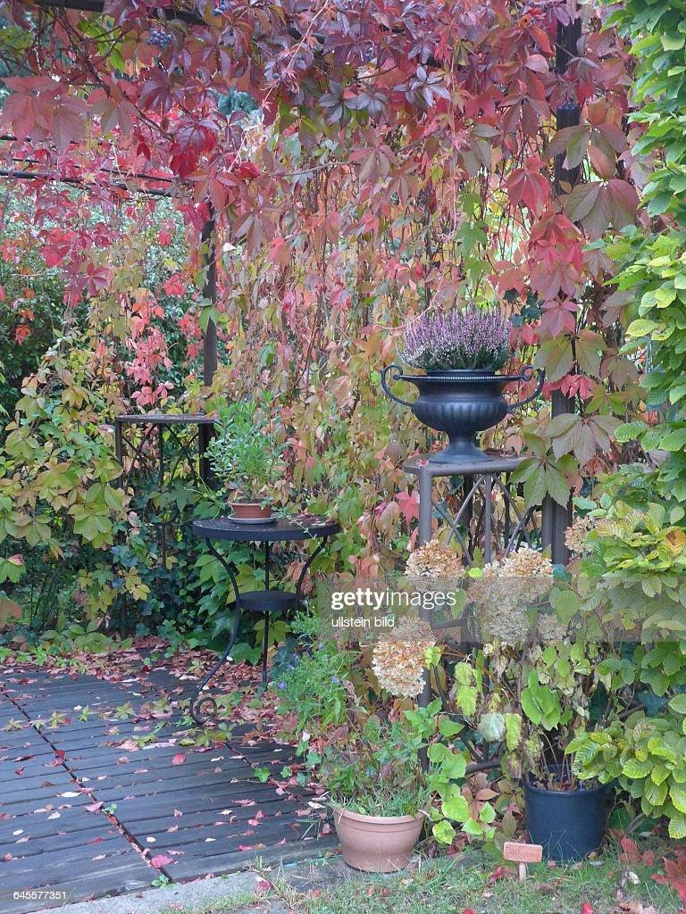wein im garten, blumen und pflanzen brandenburg deutschland pictures | getty images, Design ideen