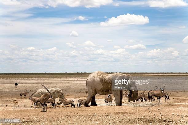 wilderness animals etosha pan namibia - desert elephant stock pictures, royalty-free photos & images