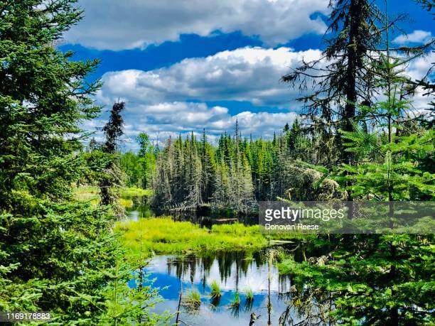 wilderness    boundary waters canoe area    minnesota - boundary waters canoe area stock pictures, royalty-free photos & images
