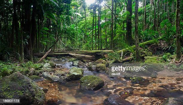 selvagem de floresta tropical - tela grande - fotografias e filmes do acervo