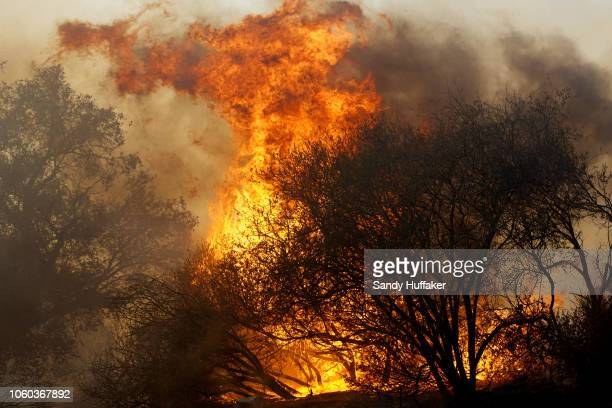 A wildfire burns at the Salvation Army Camp on November 10 2018 in Malibu California The Woolsey fire has burned over 70000 acres and has reached the...