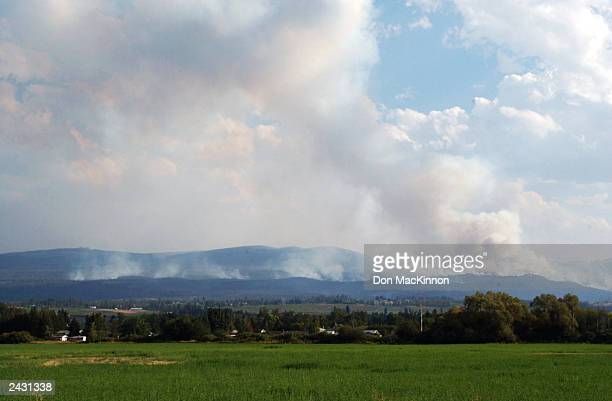 A wildfire burns in the Okanagan Mountain Park August 26 2003 near Kelowna British Columbia Canada The fire tore through the area late last week and...