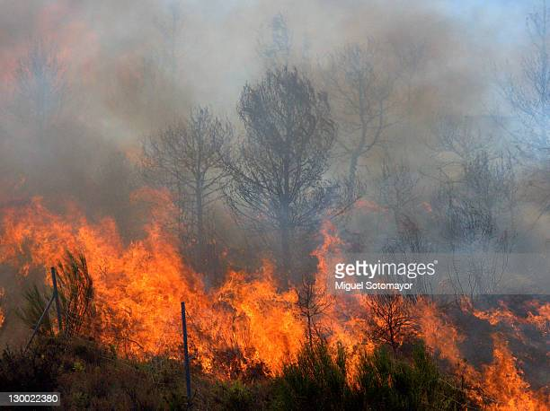 wildfire - bushfires stock photos and pictures