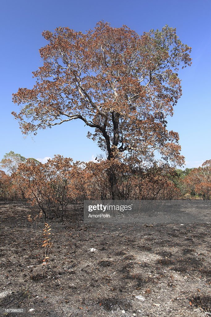 wildfire : Stock-Foto