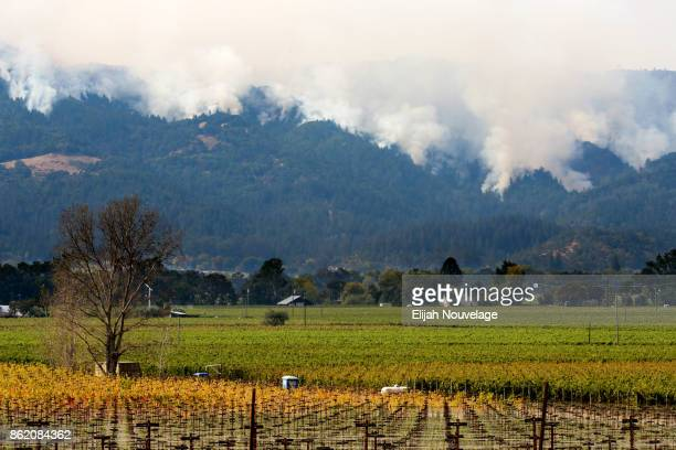 Wildfires are seen on a hillside on October 16 2017 in Oakville California At least 40 people were killed with many are still missing and at least...
