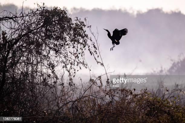 bosbranden uit de hand gelopen - pantanal stockfoto's en -beelden