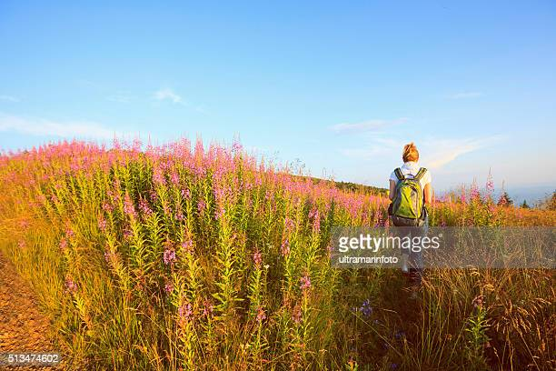 wildflower alpine meadow   mid adult women hiker     mountain landscape - march month stock photos and pictures