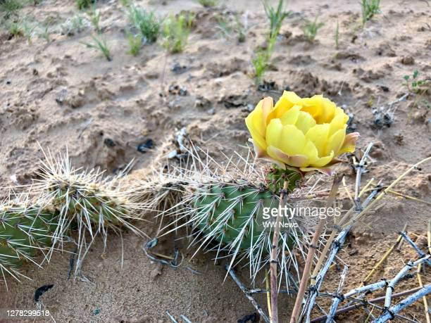 wildflower and desert - heaven earth oasis charity fundraiser stock pictures, royalty-free photos & images