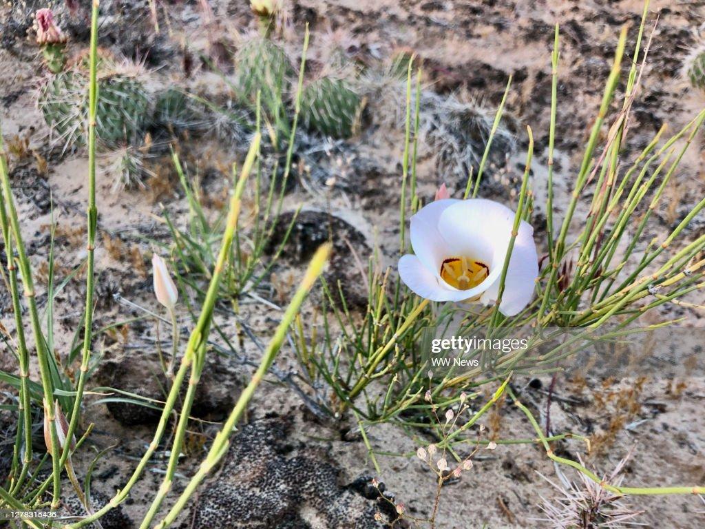 Wildflower and desert : Stock Photo