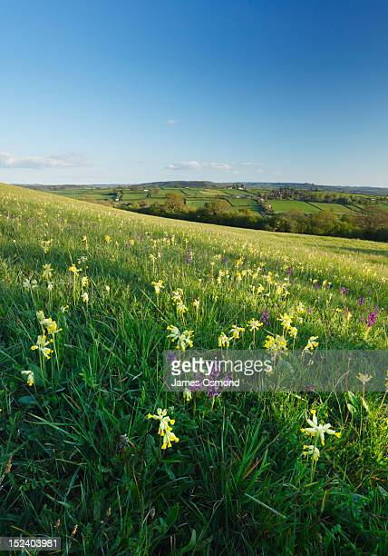 wildflower meadow - nature reserve stock pictures, royalty-free photos & images