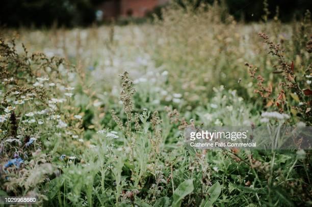 wildflower - wilde tiere stock-fotos und bilder