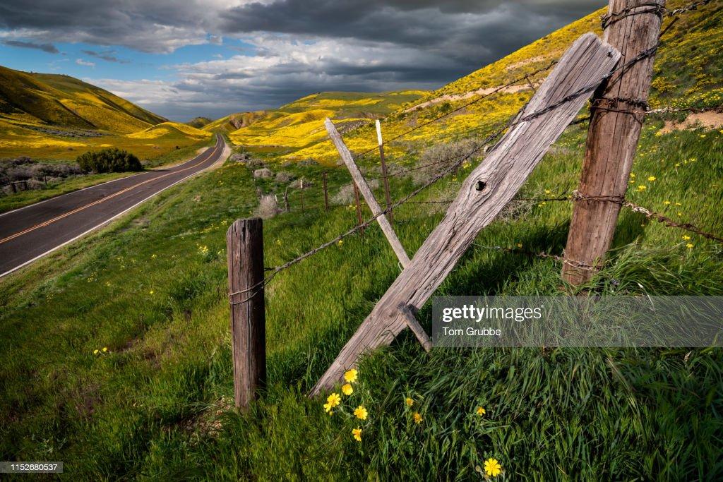 Wildflower Plain : Stock Photo