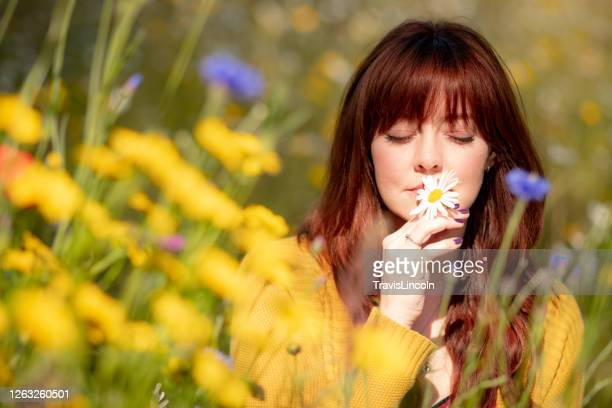 wildflower portrait - meadow stock pictures, royalty-free photos & images