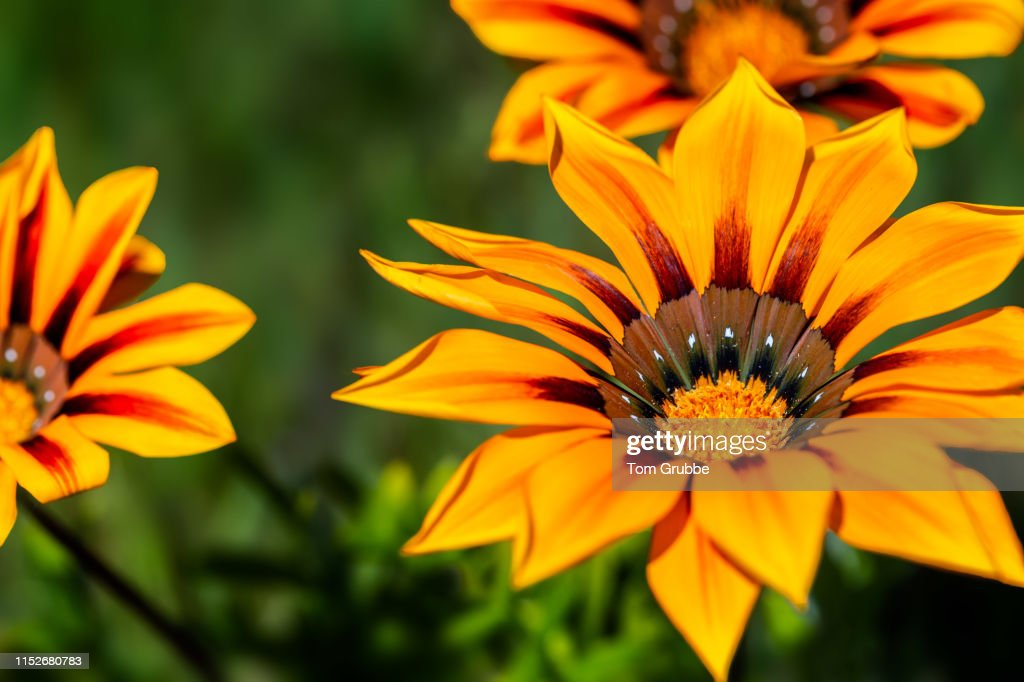Wildflower Postcard : Stock Photo