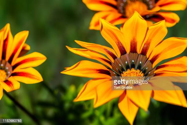 wildflower postcard - tom grubbe stock pictures, royalty-free photos & images