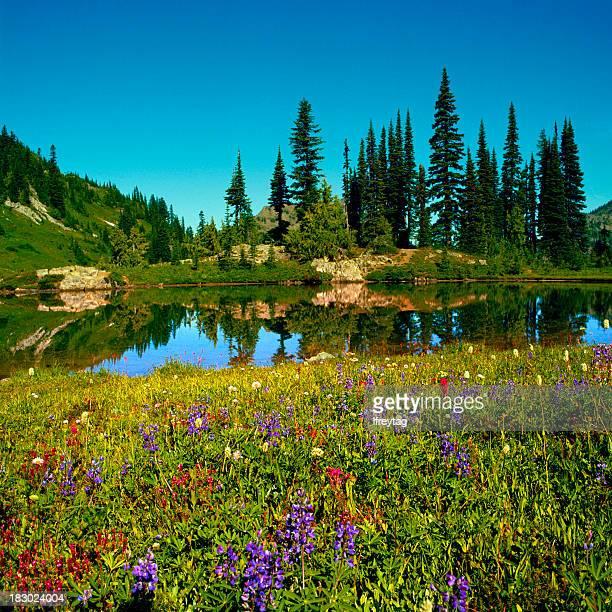 Wildflowers and Alpine Lake, Mount Rainier, Washington