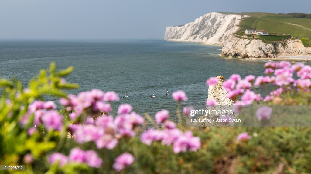 Wildflowers and Paddleboarders : Stock Photo