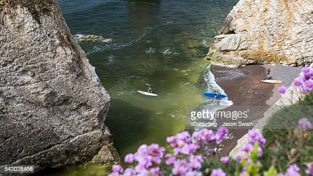 wildflowers and paddleboarders - freshwater bay isle of wight stock pictures, royalty-free photos & images
