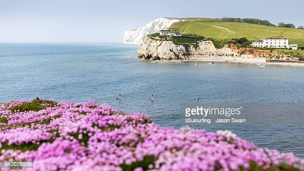 wildflowers and paddleboarders - isle of wight stock pictures, royalty-free photos & images